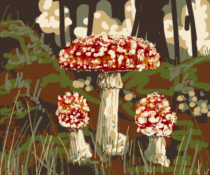 red spotted poisonous mushrooms in a forest