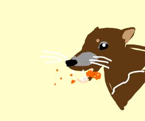 Tasmanian Devil vs Carrot