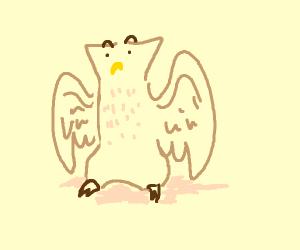 Stunned owl