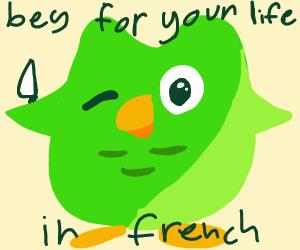 Duolingo bird on its murder spree