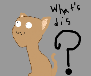 cat going owo what's this