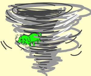 green pig in tornado