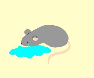 Rat cry's a river