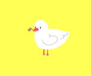 gay chicken