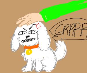 Angry Dog Gets Pet