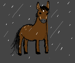 Horse outside while its raining