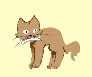 Cat Holding A Bone