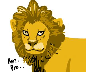 A lion purrrs