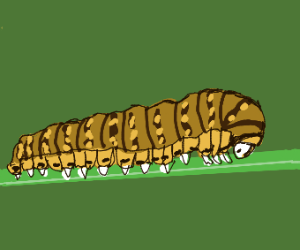 Brown and yellow caterpillar