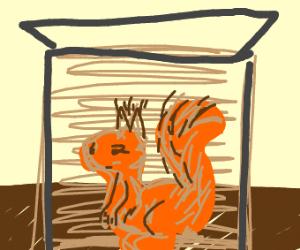 Orange Squirrel In box