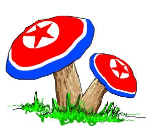 North Korea shroom