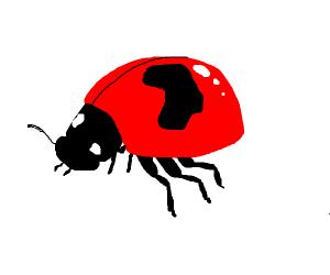 ladybug with one big spot