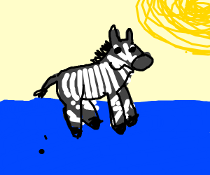 A zebra on the water on a sunny day