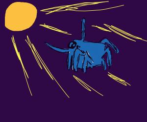 spider praises the sun