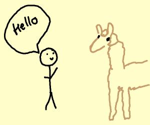 Guy says hello to a llama
