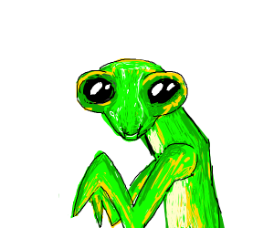 Cute Pray Mantis