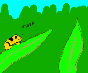 Yellow frog clinging to grass