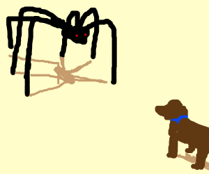 Creepy long legged spider coming for dog.