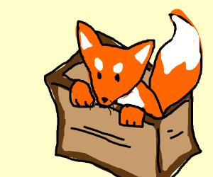 Fox in a Package