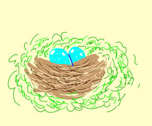 2 eggs in a nest