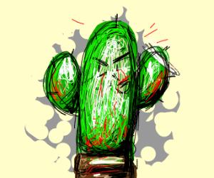 Pleased killer cactus