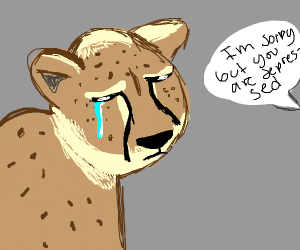 cheetah diagnosed with clinical depression
