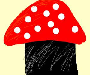 fat mushroom