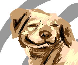 suspiciously happy dog