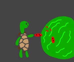 Tortoise meets giant watermelon