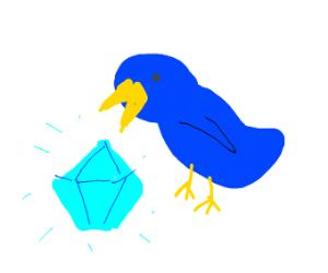 Bird finds diamond