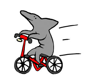 Dolphin riding a bicycle