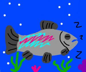 Rainbow Trout Sleeping
