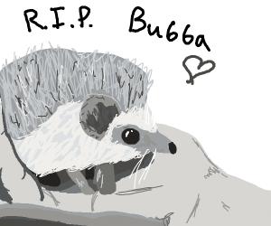 RIP Bubba, the hedgehog