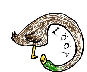 duck loop