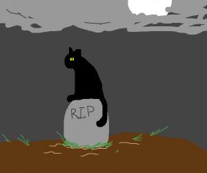 black cat walks over grave