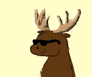 Gangsta Moose