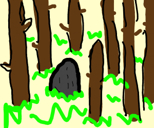 Avocado in the Forest