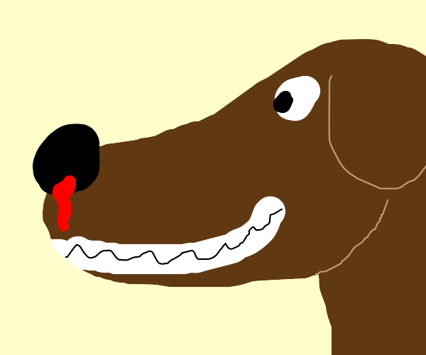 Dog with bleeding nose