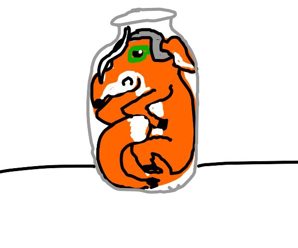 fox in a jar?