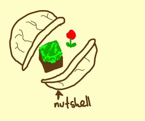 Minecraft in a nutshell + flower