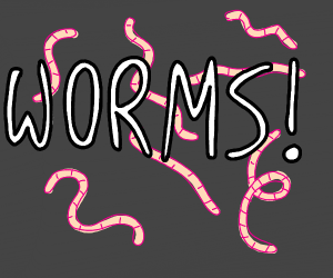 Worms!!!