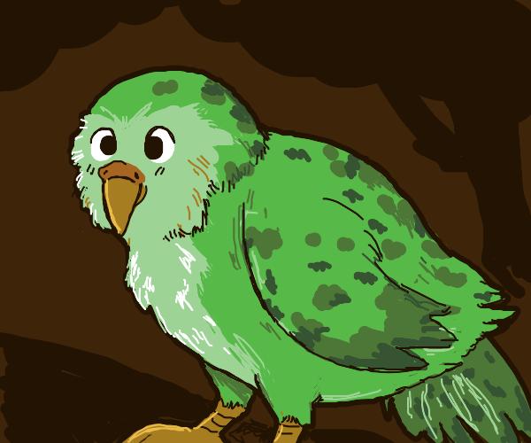 Kakapo (bird)
