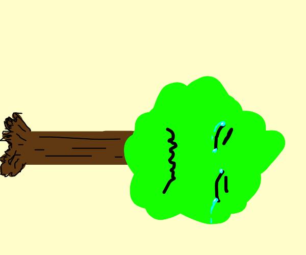 tree is sad that it's fall