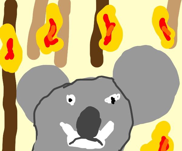 Koala head in a burning forest