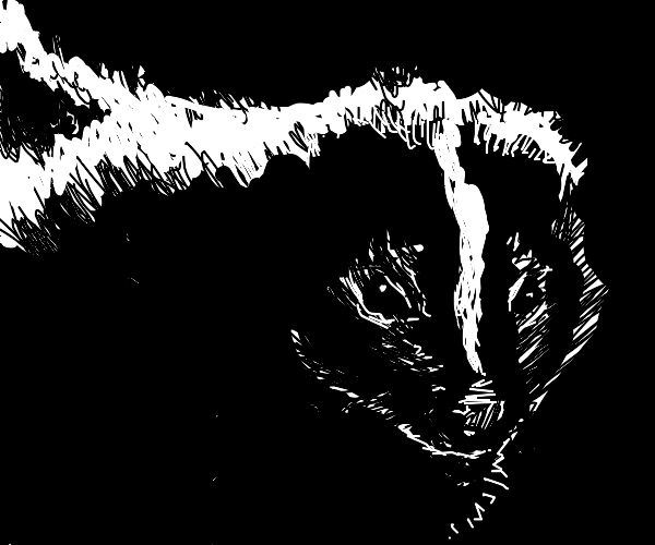 A mad skunk is staring at you