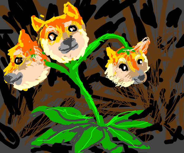 Doge plant