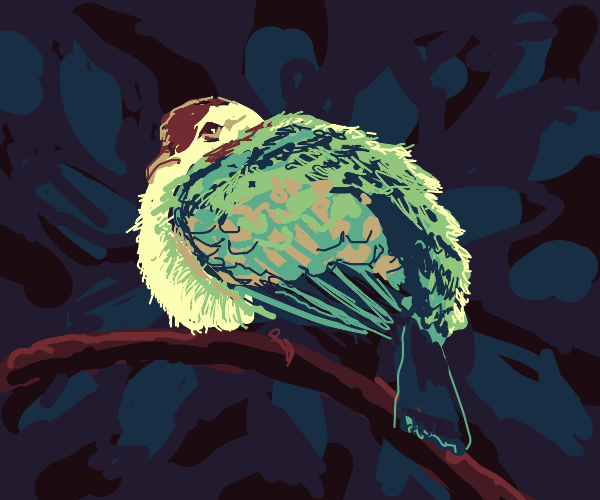 Detailed lil fat bird, a colorful dove.