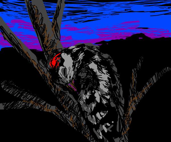 Woodpecker Sleeping
