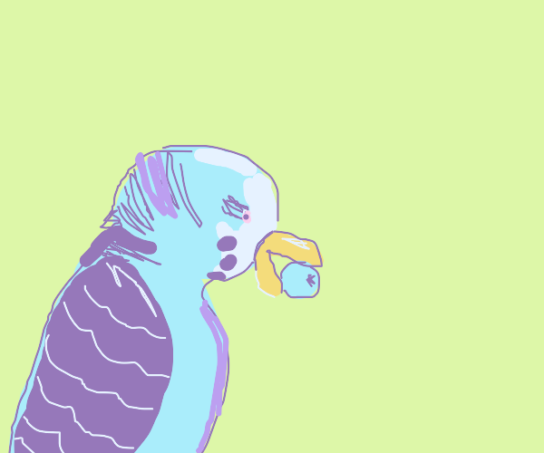 Parakeet with blueberries in its mouth