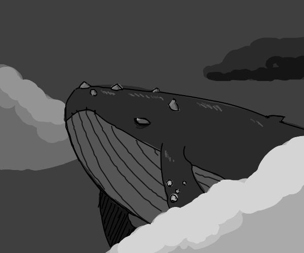 whale noir